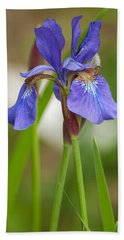 Purple Bearded Iris Bath Towel