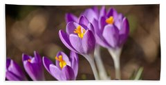 Purple Crocus Hand Towel by Scott Carruthers