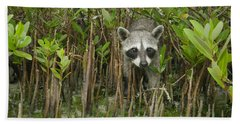 Pygmy Raccoon Amid Mangroves Cozumel Hand Towel