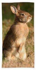 Rabbit Standing In The Sun Bath Towel