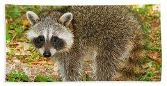 Raccoon Hand Towel by Millard H Sharp