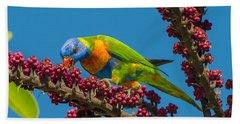 Rainbow Lorikeet Feeding On Queensland Bath Towel
