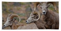 Rams In Three Hand Towel by Athena Mckinzie