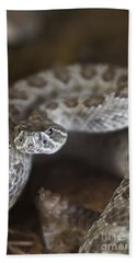 A Rattlesnake Thats Ready To Strike Hand Towel