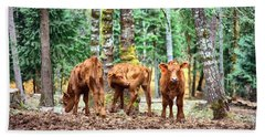 Red Angus Calves Bath Towel