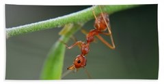 Red Ant Bath Towel by Michelle Meenawong