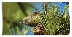 Red Crossbill Eating Cone Seeds Hand Towel