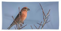 Red Crossbill Male Hand Towel