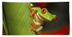 Red Eyed Leaf Frog Hand Towel by Bob Hislop