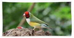 Red Headed Gouldian Finch Hand Towel