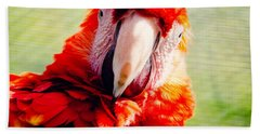 Red Macaw Hand Towel by Pati Photography