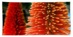 Red-orange Flower Of Eremurus Ruiter-hybride Hand Towel