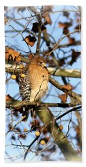 Red-shouldered Hawk - Img_7943 Hand Towel by Travis Truelove