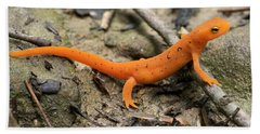 Red-spotted Newt Hand Towel