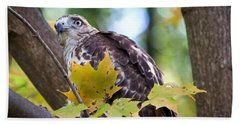 Red Tail Hawk Closeup Hand Towel by Eleanor Abramson