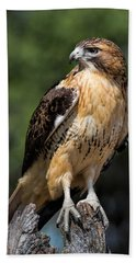 Red Tail Hawk Portrait Bath Towel