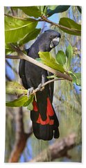 Red-tailed Black-cockatoo Queensland Hand Towel