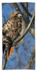 Red-tailed Hawk Hand Towel