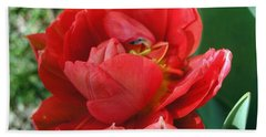 Bath Towel featuring the photograph Red Tulip by Vesna Martinjak