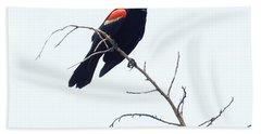 Red-winged Blackbird Bath Towel by Paul  Wilford