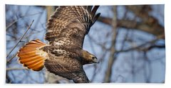 Redtail Hawk Hand Towel by Bill Wakeley