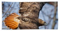 Redtail Hawk Square Hand Towel by Bill Wakeley