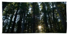 Redwood Trees In A Forest, Del Norte Hand Towel