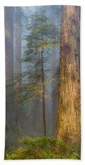 Redwoods In The Blue Mist Hand Towel