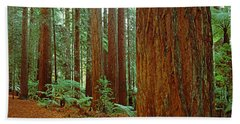 Redwoods Tree In A Forest Hand Towel