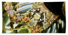 Bath Towel featuring the photograph Reef Lobster Close Up Spotlight by Amy McDaniel