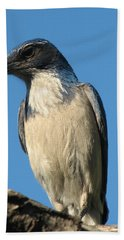 Regal Western Scrub Jay Hand Towel
