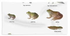 Relative Amphibian Sizes Hand Towel