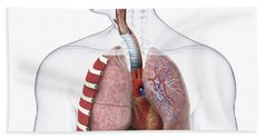 Respiratory System, Illustration Hand Towel