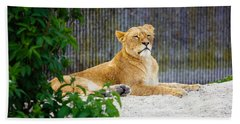 Resting Lioness Hand Towel