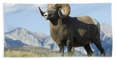 Rocky Mountain Big Horn Sheep Bath Towel by Bob Christopher