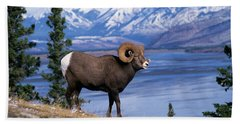 Rocky Mountain Bighorn Ovis Canadensis Hand Towel