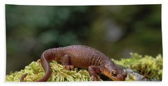 Rough-skinned Newt Oregon Hand Towel