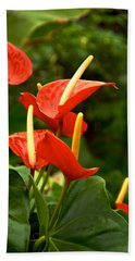 Rousing Reds Hand Towel by Dee Dee  Whittle