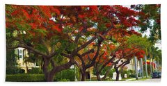Royal Poinciana Trees Blooming In South Florida Hand Towel