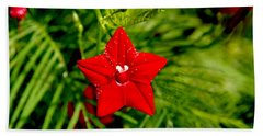 Scarlet Morning Glory - Horizontal Hand Towel by Ramabhadran Thirupattur