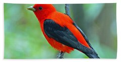 Scarlet Tanager Bath Towel