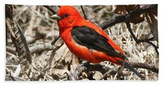 Scarlet Tanager Hand Towel
