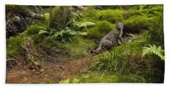 Scottish Wildcat And Domestic Cat Bath Towel
