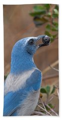 Hand Towel featuring the photograph Scrub Jay With Acorn by Paul Rebmann