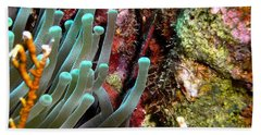 Bath Towel featuring the photograph Sea Anemone And Coral Rainbow Wall by Amy McDaniel