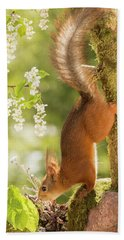 Side View Of Red Squirrel Climbing Hand Towel
