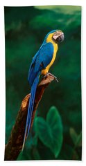 Singapore Macaw At Jurong Bird Park  Hand Towel by Anonymous
