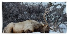 Sleeping Elk Bath Towel