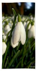 Hand Towel featuring the photograph Snowdrops by Nina Ficur Feenan