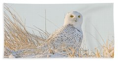 Snowy Owl In The Snow Covered Dunes Hand Towel